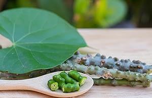 Giloy Ghan - Extract of Giloy (Tinospora cordifolia) - Dr. Vikram's Weblog